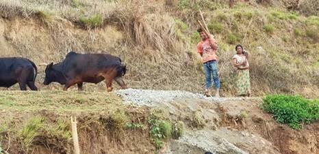 Nepal Goat Photo