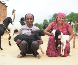 Happy couple with goat farming (2)